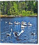 Taking Flight In Ontario Acrylic Print