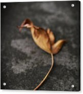 ..talk To Me About The Days Of Yore... Acrylic Print