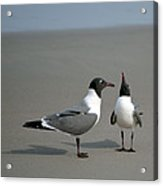 Talk To The Wing Acrylic Print