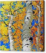 Tall Aspen Trees Acrylic Print
