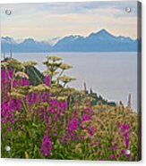 Tall Fireweed And Cow Parsnip Over Cook Inlet Near Homer- Ak Acrylic Print