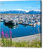 Tall Fireweed By The Marina Along Homer Spit-ak  Acrylic Print