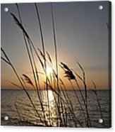 Tall Grass Sunset Acrylic Print