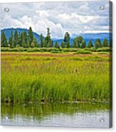 Tall Grasses In Swan Lake In Grand Teton National Park-wyoming Acrylic Print