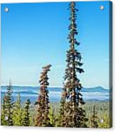 Tall Pine Trees And Hilly Background Acrylic Print