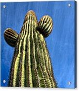 Tall Saguaro Cactus Acrylic Print