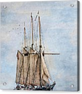 Tall Ship Denis Sullivan Acrylic Print