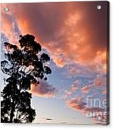 Tall Tree Against A Dramatic Sunset Clouds Sky Acrylic Print