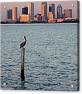Tampa Skyline And Pelican Acrylic Print
