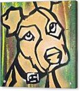 Tan Dog Acrylic Print