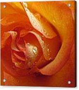 Tangerine Beauty Acrylic Print