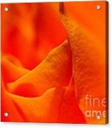 Tangerine Dreams Acrylic Print