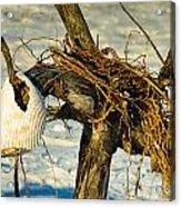 Tangled Driftwood Acrylic Print