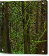 Tangled Forest Acrylic Print