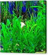 Tangled Garden On The Canal Canadian Art Montreal Landscapes Lachine Quebec Scenes Carole Spandau  Acrylic Print
