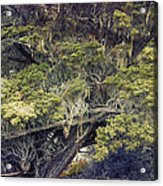 Tangled Neighbors Of The Lone Cypress Acrylic Print