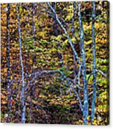 Tangled Tennessee Acrylic Print