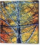 Tangled Web 2 Acrylic Print