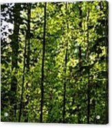 Tannehill Forest Acrylic Print