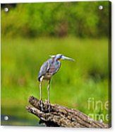 Tantalizing Tricolored Acrylic Print by Al Powell Photography USA