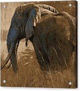 Tarangire Bull Acrylic Print by Aaron Blaise