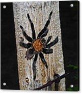 Tarantula Acrylic Print