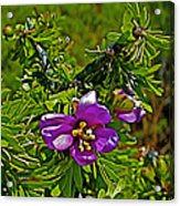 Tarbush In Chihuahuan Desert Of Big Bend National Park-texas   Acrylic Print