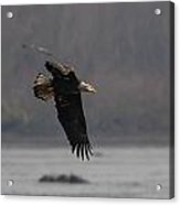 Target Spotted Acrylic Print by Glenn Lawrence