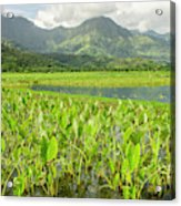 Taro Fields In Hanalei National Acrylic Print