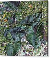 Taro Garden Acrylic Print