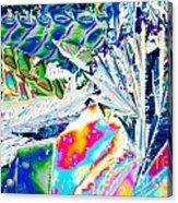 Tartaric Acid Crystals In Polarized Light Acrylic Print