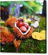 Taste Of Autumn Acrylic Print