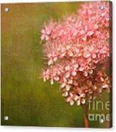 Taste Of Summer Acrylic Print