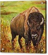 Tatanka, Buffalo  Acrylic Print