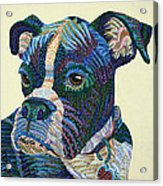 Tater - Portrait Of A Boxer Acrylic Print by Erika Pochybova