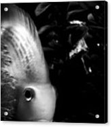 Tathata #0000000007 Acrylic Print by Alex Zhul