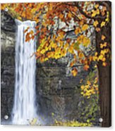 Taughannock Falls And Maple Acrylic Print