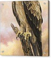 Tawny Eagle Acrylic Print