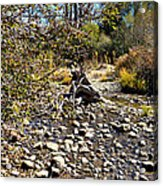 Taylor Creek Lake Tahoe Acrylic Print