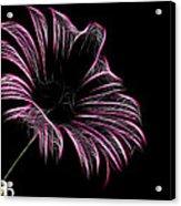 Tea And A Flower Acrylic Print
