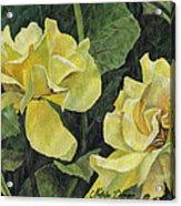 Tea Rose Acrylic Print by Natasha Denger