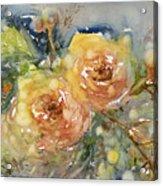 Tea Roses Acrylic Print