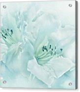 Teal Green Azalea Flowers Acrylic Print