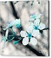 Teal Blossoms Acrylic Print