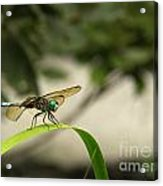 Teal Dragonfly Acrylic Print