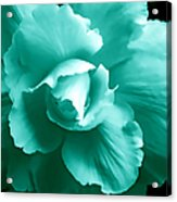 Teal Green Begonia Floral Acrylic Print by Jennie Marie Schell