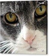 Tears Of A Cat Acrylic Print