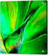 Technicolor Succulent Acrylic Print