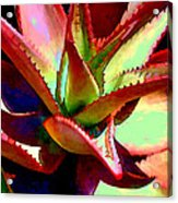 Technicolored Agave Succulent Acrylic Print