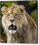 Teenage King Of The Beast Acrylic Print